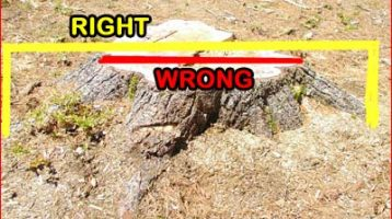 Measure a Stump for Removal