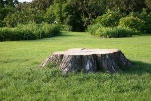 stump removal mi